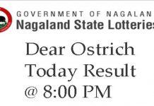 Dear Ostrich Result
